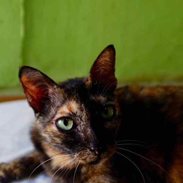 bali-villa-kitty-green-eyes-1