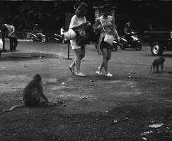 Monkey at the Sacred Monkey Forest in Ubud - Ubud Street Photographer Tours