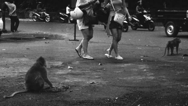 Monkey at the Sacred Monkey Forest in Ubud - Ubud Street Photographer Tours
