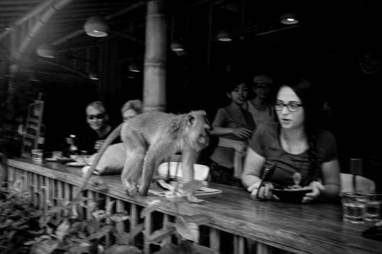 Ubud wildlife on Jalan Monkey Forest, Indonesia - Bali Street Photographer