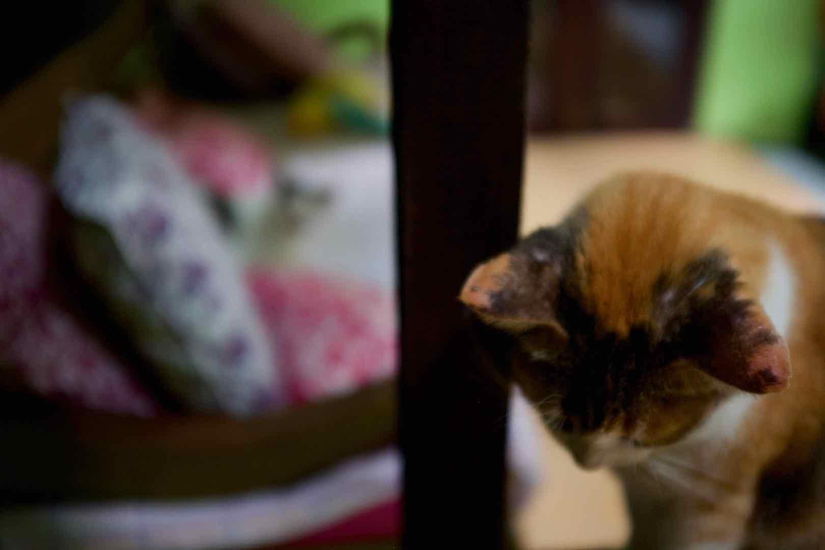 Villa Kitty Ubud Bali - Bali Street Photographer donation partner
