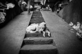 Waiting for scraps ©️ Les Telford with Bali Street Photographer