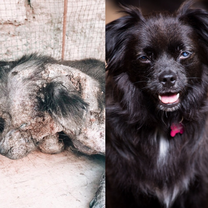 Hope Before & After Diptych - Mission Paws'ible and Bali Street Photographer