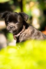 Hope - A dog rescued by Mission Pawsible Dog Rescue, Adoption, and Rehome in Bali