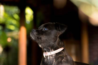 Mission Pawsible Dog Rescue, Adoption, and Rehome - Bali, Indonesia