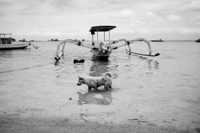 Bali Dog Gone Fishing - Bali Street Photographer in Nusa Lembongan