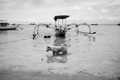 Bali Dog Gone Fishing - Bali Street Photographer in Nusa Lembongan