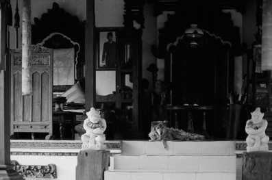 Bali Dog on 35 mm film - Bedugul Bali