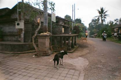 Bali Dog on 35 mm film - Somewhere in Bali