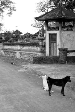 Bali Dogs - Somewhere in Bali - Bali Street Photographer