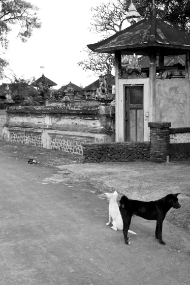 Bali Dogs - Somewhere in Bali - Bali Street Photographer