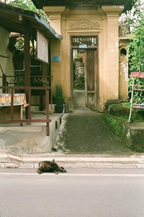 Bali Dog on 35 mm film - Ubud Bali
