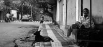 Bali Street Dog with Bapak Ubud - Bali Street Photographer Tour