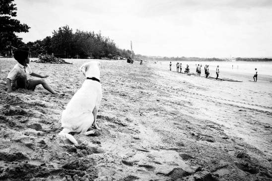 Bali Dog on 35 mm film - Kuta Beach Bali