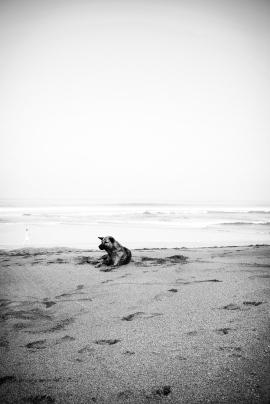 Bali Dog on Kuta Beach - Bali Street Photographer