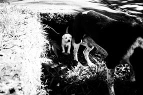 Bali Street Dog with her puppies - Bali Street Photographer