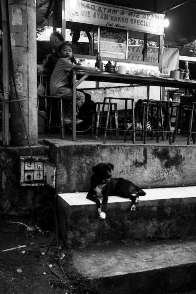 Bali Dog at Pasar Sayan Night Market - Bali Street Photographer