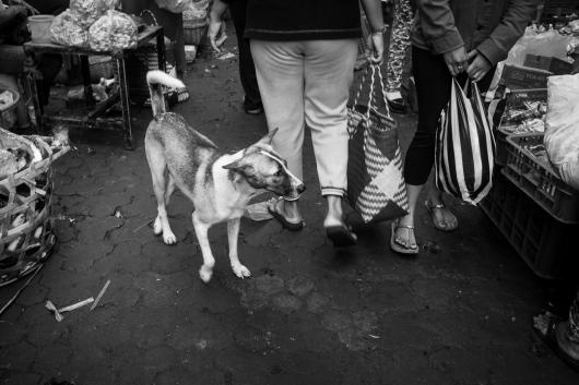 Bali Dogs of the Pasar - Pasar Ubud Bali Street Photographer Tour