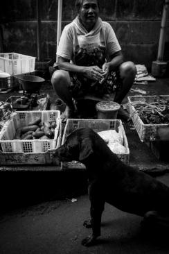 Angjing Bali (Bali Dog) Bali Street Photographer