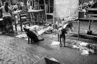 Bali Dogs of the Pasar - Bali Street Photographer