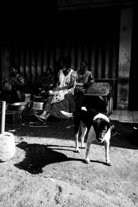 I love Bali Dogs - Bali Street Photographer