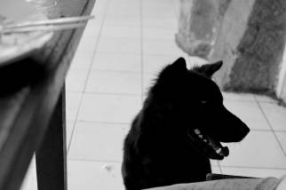 Bali Dog at the Warung - Ubud Bali - Street Photography