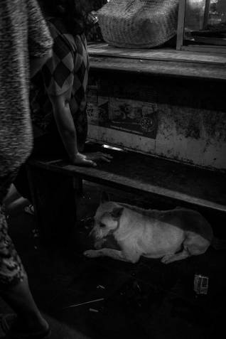 Bali Dogs of the Pasar by Bali Street Photographer