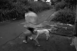 Bali Street Dogs in Kintamani Bali - Street Photography