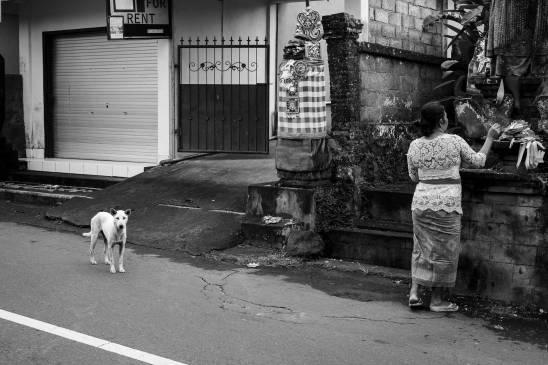 Bali Dog on Kuningan Day 2019 - Street Photography