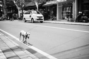 Bali Street Dog of Ubud Bali - Bali Street Photographer