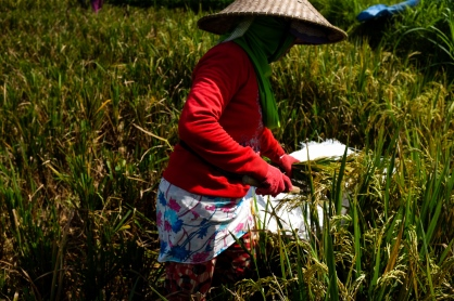 Woman working in the rice fields of Bali exhibited by Don't Take Pictures - Bali Street Photographer