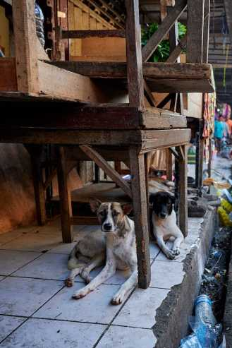 Bali Dogs of the Pasar - Photo ©️ Nick Holt on the Bali Street Photorapher Tour in Pasar Ubud