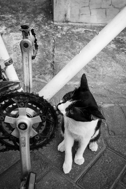 This little kitty cats really wanted to meet me and sniff my bicycle on the backstreets of Surabaya - Bali Street Photographer August 2019