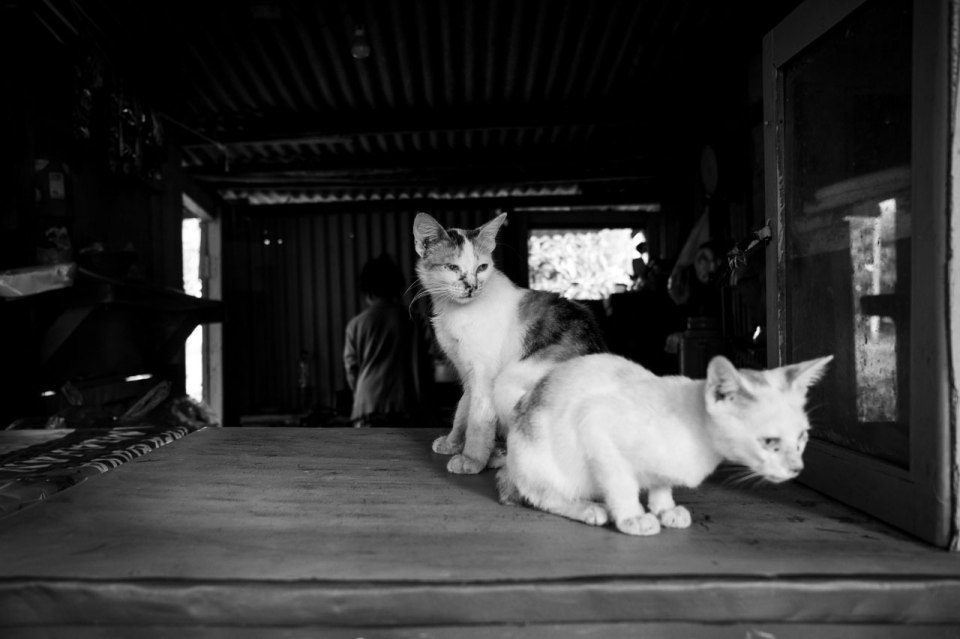 Kitty cats greet me at a warung in Surabaya - Bali Street Photographer
