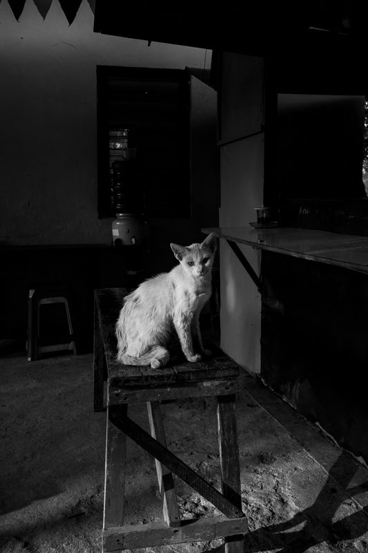 Kitty cats greet me at a warung in Surabaya - Bali Street Photographer August 2019
